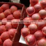 apple fruit fresh fresh apple fruit for sale export fresh red delicious apple fruit fresh apple