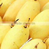 Namdokmai Fresh Golden Mango Grade A 300-400 G Loose Pack From Thailand