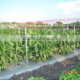Extruded PP vertical trelling net for vegetable growth