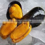 bleu mussel with half shell