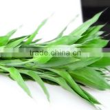 Quality Lucky Bamboo water jelly beads for lucky Dracaena sanderiana