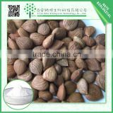 Factory Supply Bitter Apricot Seeds Extract/ Bitter Almond Extract Powder 5:1 Free Sample