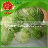 chinese brands cabbage fresh green cabbage sour cabbage