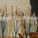 Natural dry tree branch for decoration