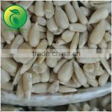 Hulled Sunflower Kernel Bakery Grade With High Quality