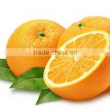 Orange fresh fruit is used mostly for juice extraction
