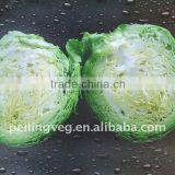 Chinese Round Cabbages New!!HOT!!
