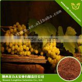 Grape Seed Extract Enhance Skin Elasticity