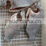 Whosale Gutted and Gilled Frozen Black Tilapia Fish