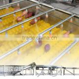 large type sweet potato( agricultural products) washing and retaining freshness line Mob/Whatsapp: +86 18281862307 (May Liao)