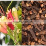 CLOVE OIL FOR ORGANIC USES