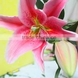 Hobby Lobby Wholesale Flowers High Quality Pink Lily For Decoration Wholesale From Yunnan