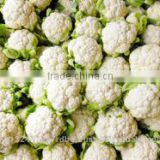 fresh Cauliflower exporters/gobi suppliers in india/fresh vegetables export