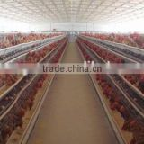 agricultural steel buildings steel structure design poultry farm shed