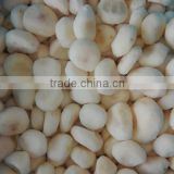 Best quality iqf frozen water chestnuts organic water chestnut