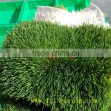 hydroponic fresh wheatgrass growing system radish seeds sprouting machin/Green Barley Fodder Machine/green fodder making machine