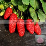 Competative price and quality 100% Water Soluble Strawberry Fruit Flavor Powder for beverage and food
