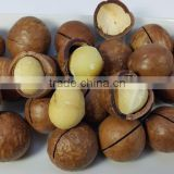 Raw and Roasted Vietnam Macadamia Nuts