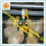 Africa farm Automatic chicken Pan Feeding linesSystem equipment farm