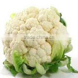 Fresh Cauliflower for sale