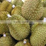 Fresh durian fruit for sale