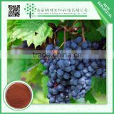 100% Natural Polyphenols 95% Grape Seed Extract Powder free sample