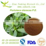 High quantily natural Portulaca oleracea extract powder