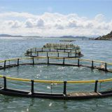 Wind And Wave Resistance Net Cage Fish Farming Floating Cage