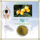 Manufacturing can OEM Corosolic Acid natural organic Loquat Extract