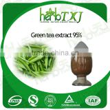 High quality pure 100% green tea extract l-theanine