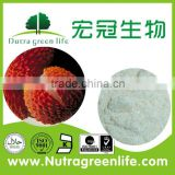 factory outlet Kosher Rich in sugar and protein food Beverage additive pure Chineses litchi fruit powder