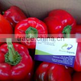 Farm Capsicums/Fresh Exotic Vegetables/Farm Bell Peppers!