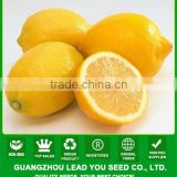 JLM01 Kingdeli fruit seeds in lemon tree seeds, lemon seeds