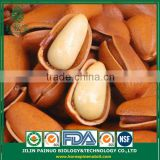 Constant Supply Clear Clean Agriculture Siberian Open Pine Nuts in Shell