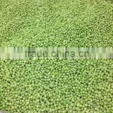 Wholesale frozen fresh IQF green peas