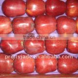 fresh Huaniu apple for sell