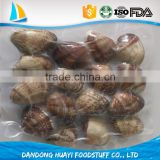 Good quality cooked clams in shell