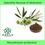 High Quality Health  product olive leaf extract Hydroxytyrosol