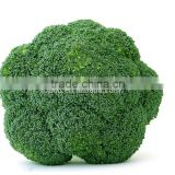 2015 New Crop Green Broccoli/Frozen Broccoli