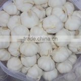 6.0 normal white garlic for selling,for cooking,clear garlic, year garlic,fresh garlic, chinese garlic
