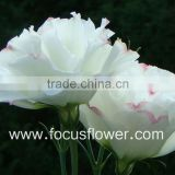 Real Touch Artificial Flower Wholesale Factory Purple Eustoma Cut Flowers From Focus From Yunnan