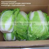 2016 fresh chinese cabbage
