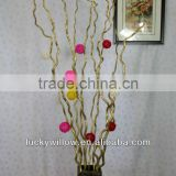 Prafessional factory supply Chinese dragon willow ,longliu,dragon sang for home & office decoration