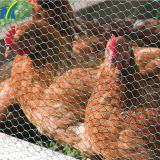 Chicken Wire Netting Hexagonal Wire Netting Poultry Mesh