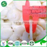 iqf water chestnut and fresh water chestnut slice price