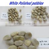 mexican beach pebbles/flat pebbles/rain flower pebble