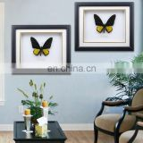 Butterfly Specimen with Wooden Frame wholesale 10 inch