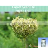 Carrot Seed Base Oil,Carotol