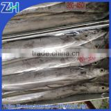 Frozen ribbon fish for sale