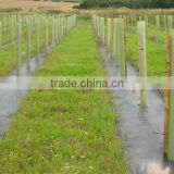 PP woven weed mat/ground cover /black fabric/weed barrier for agriculture